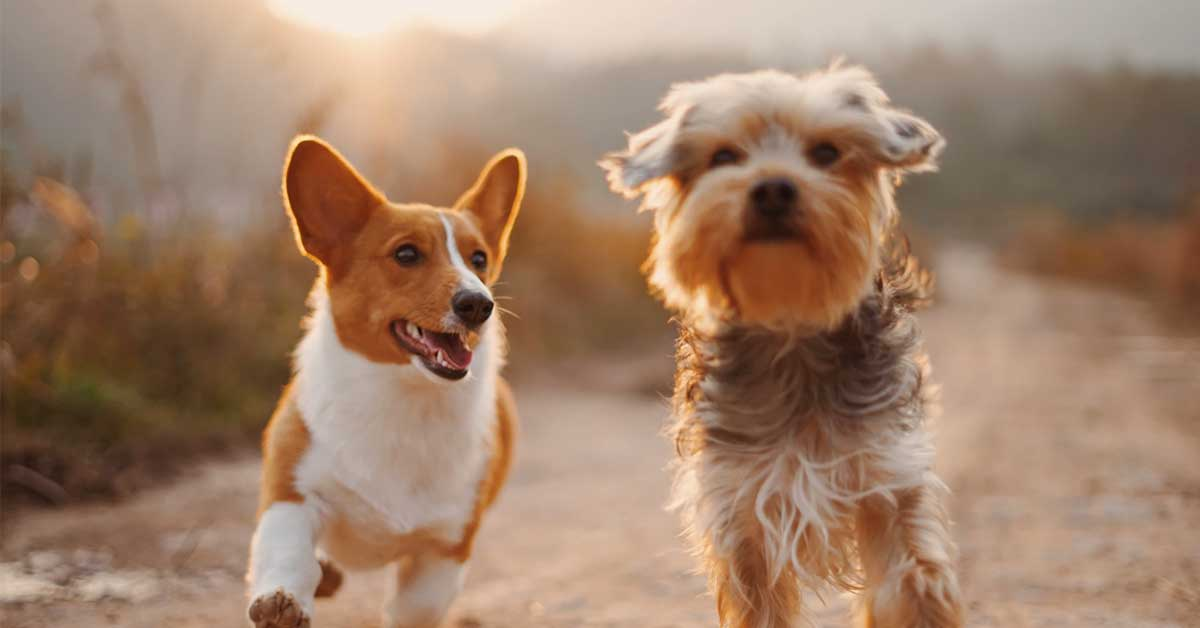 what-does-pet-business-insurance-cover
