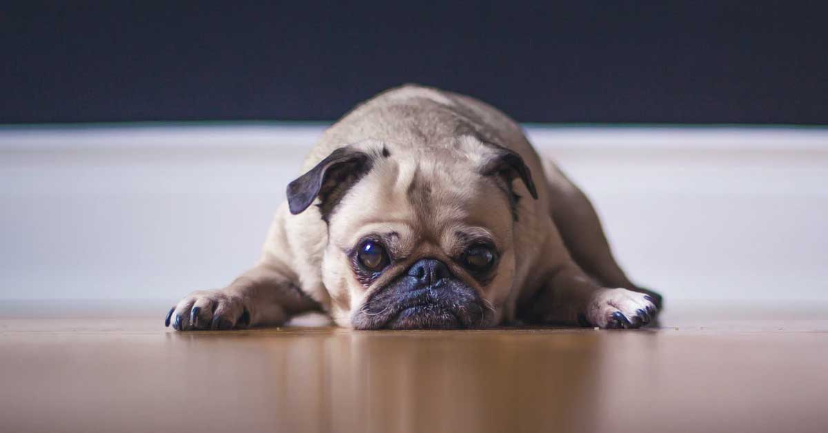 what-is-pet-business-insurance
