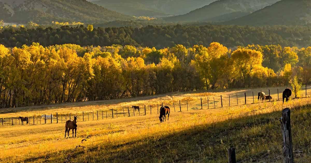 comprehensive ranch insurance
